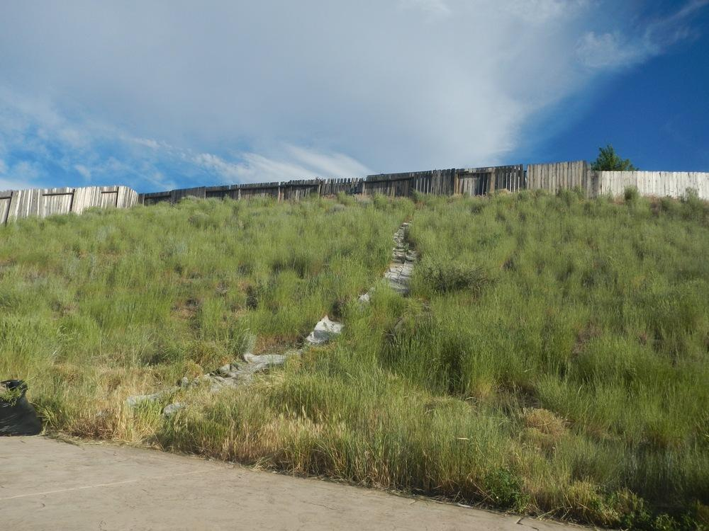 Ask a Question forum: Steep Hillside Full of Grasses and ...