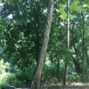 Location: Perelman Park, Manheim Township, Lancaster County PennsylvaniaDate: 2016-07-21