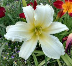 Thumb of 2016-07-23/DogsNDaylilies/2fc9dd
