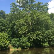 Location: Conestoga River at Perelman Park near Lancaster PADate: 2016-07-21