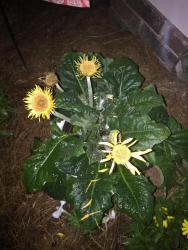 Thumb of 2016-07-26/visitor/632c92