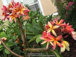 Thumb of 2016-07-30/GigiPlumeria/09c689
