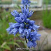 Location: RHS Harlow Carr alpine house, Yorkshire, UKDate: 2016-07-27