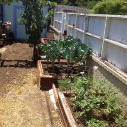 Rustic Raised Beds