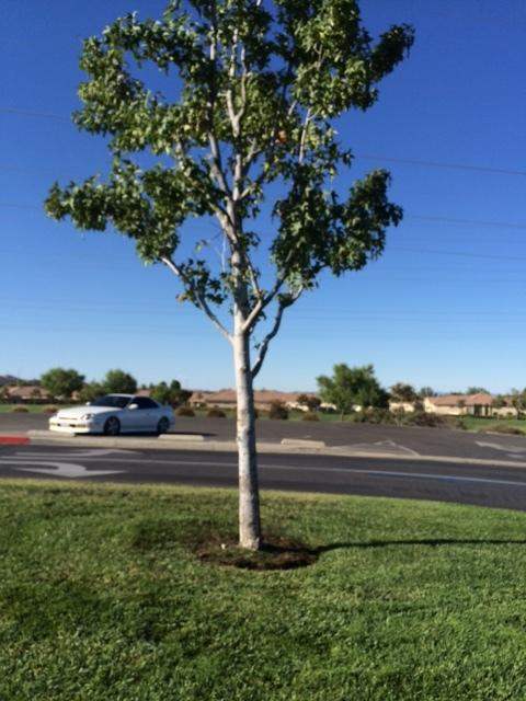 Plant id forum what is this tree national gardening for National gardening association