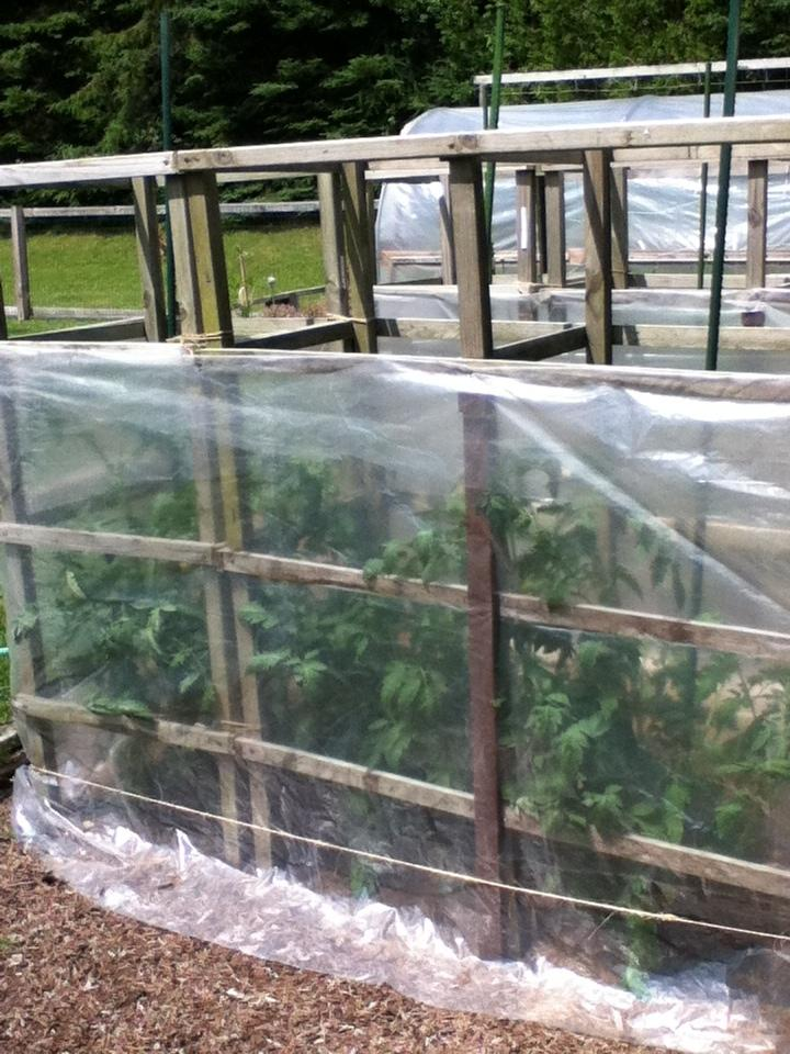 Ask A Question Forum Diy Tomato Cage Gardenorg