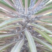 Location: Baja CaliforniaDate: 2016-08-26New growth