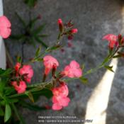 Location: My garden in Northern KYDate: 2014-06-14