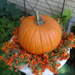 Use Your Garden To Decorate for Fall