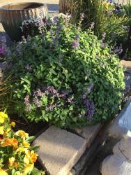 Thumb of 2016-09-28/SpringGreenThumb/38e248