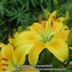 Thumb of 2016-09-28/daylilly99/1a160a