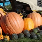 Photo of Pumpkin (Cucurbita maxima 'Dill's Atlantic Giant')