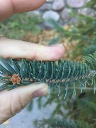 Thumb of 2016-10-06/SpringGreenThumb/2a1f6e