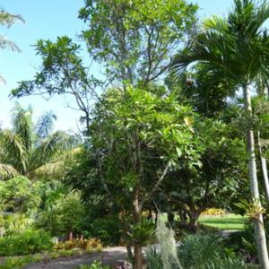 Naples Botanical Garden
