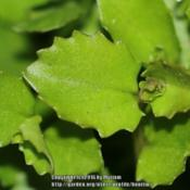 Location: My garden, Ghent, BelgiumDate: 2016-10-10