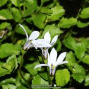 Location: My garden, Ghent, BelgiumDate: 2016-10-09