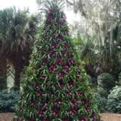 Location: Lake Wales, FLDate: 2016-12-08Bromeliad Christmas Tree at Bok Tower Gardens