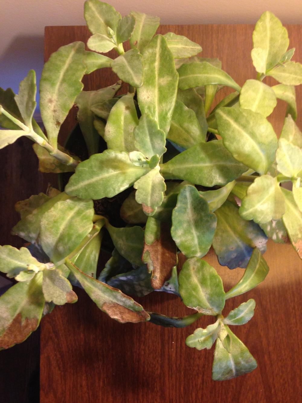 Houseplants forum help identifying a house plant Gardenorg