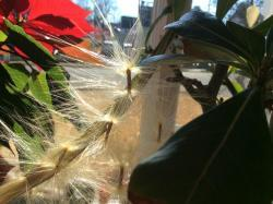 Thumb of 2017-01-01/Ursula/0c208d