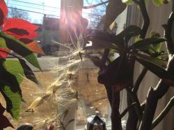 Thumb of 2017-01-01/Ursula/e2c723