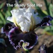 Location: Whitesboro, TexasDate: 2017-01-03Image courtesy of The Shady Spot Iris.  All rights reserved.