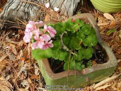 Thumb of 2017-01-04/ardesia/7bcade