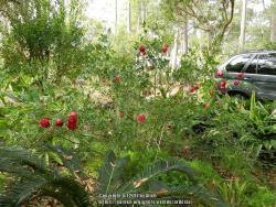 Thumb of 2017-01-04/ardesia/b80ba7