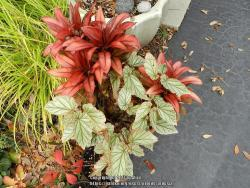 Thumb of 2017-01-04/ardesia/c8261f