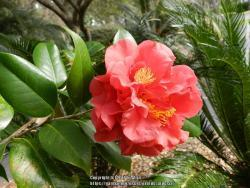 Thumb of 2017-01-04/ardesia/ea0044