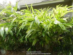 Thumb of 2017-01-04/ardesia/fba4c1