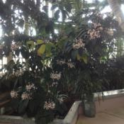 Location: Howard Peters Rawlings Conservatory, Baltimore, MarylandDate: 2017-02-01