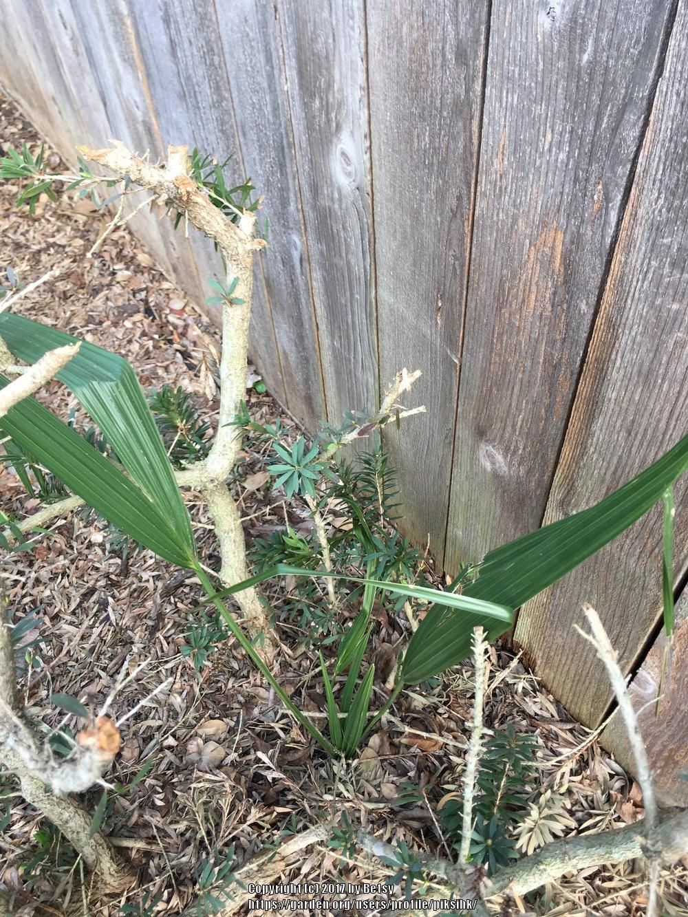 Plant ID forum Help Name Gardenorg