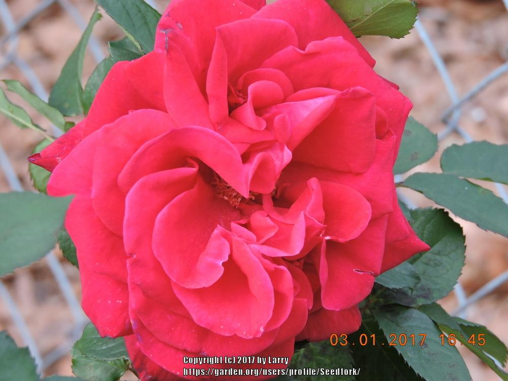 Southeast Gardening Forum Southeast Month In Bloom March April 2017