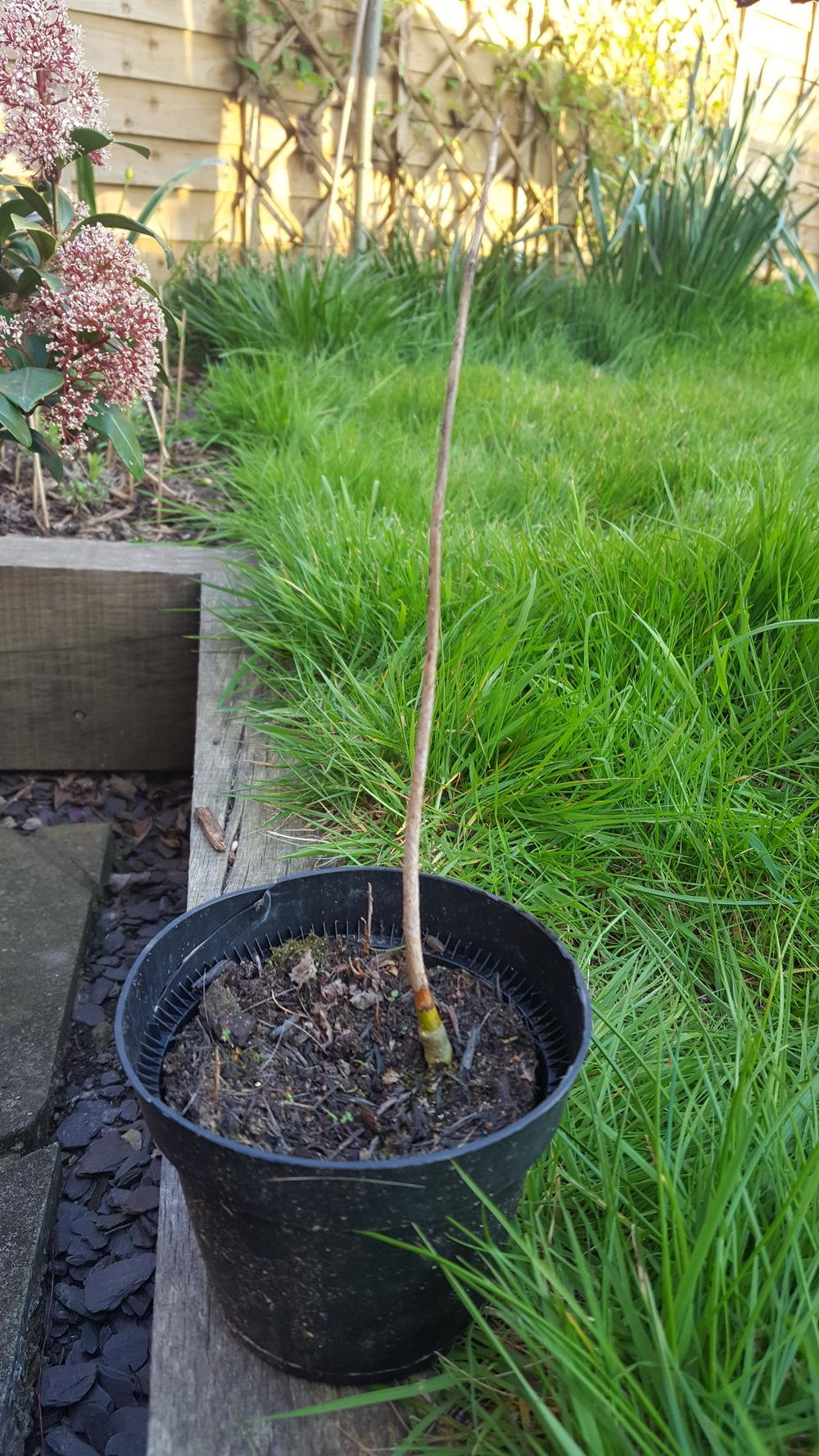 Plant Id Forum I Seem To Have Grown A Stick