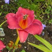 Location: Nora's Garden - Castlegar, B.C.Date: 2015-07-11 8:37 am. Despite the Bee(?) being there, this photo ni