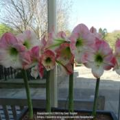Location: RHS Harlow Carr, YorkshireDate: 2017-04-22Display in the entrance to the garden