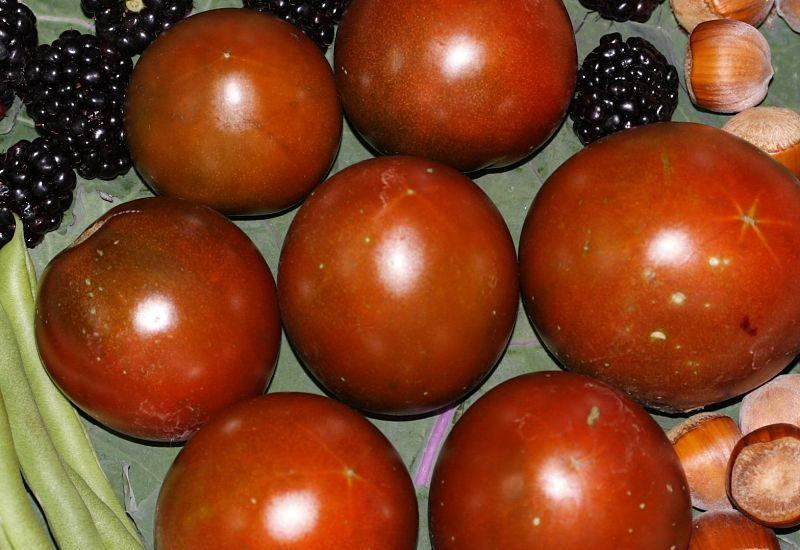 Photo of Tomato (Solanum lycopersicum 'Brown Sugar') uploaded by DianeSeeds