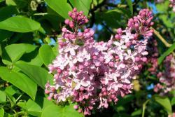 Thumb of 2017-05-01/Bonehead/078618