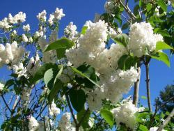 Thumb of 2017-05-01/Bonehead/1e817e