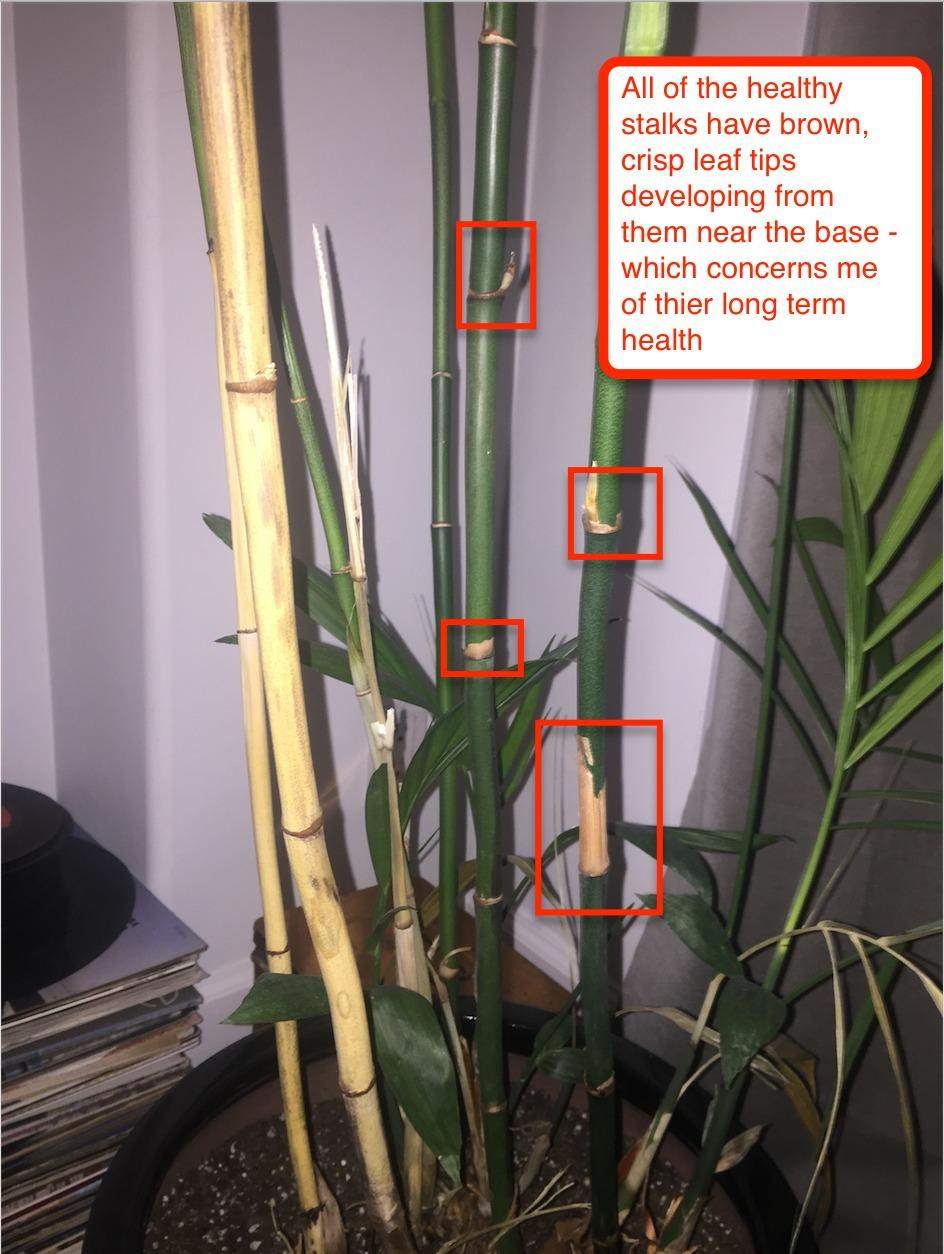 a6cf1a Palm House Plant Root Rot on house plant mold, house plant leaf spots, corn house plant rot, house plant snails, house plant fungus, house plant leaf blight, house plant insects, house plant scale, house plant nutrient deficiency, house plant caterpillars, house plant virus,