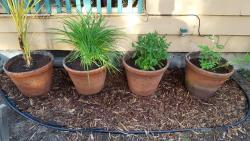Thumb of 2017-05-22/Brinybay/faaa2a
