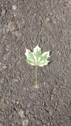 Thumb of 2017-05-25/Toni/aa1896
