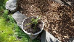 Thumb of 2017-06-05/Brinybay/7acfaa