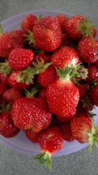 Thumb of 2017-06-14/Toni/0be190