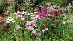 Thumb of 2017-06-14/Toni/8d4ec6
