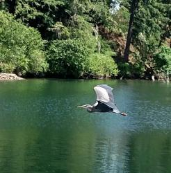 Thumb of 2017-06-14/Toni/ed1c75
