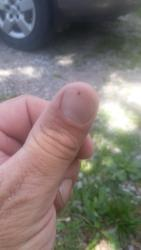 Thumb of 2017-06-16/plantcollector/640258