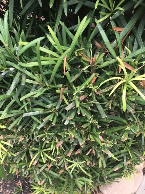 Plant ID forum Help identify this plant Gardenorg