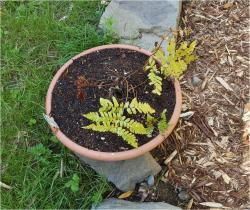 Thumb of 2017-06-18/Brinybay/d2571a
