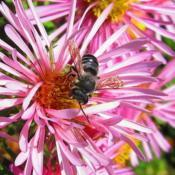 Location: central IllinoisDate: 9-30-11#pollination